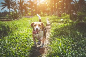 an animal-based adventure